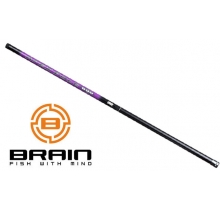 Brain Apex Polo